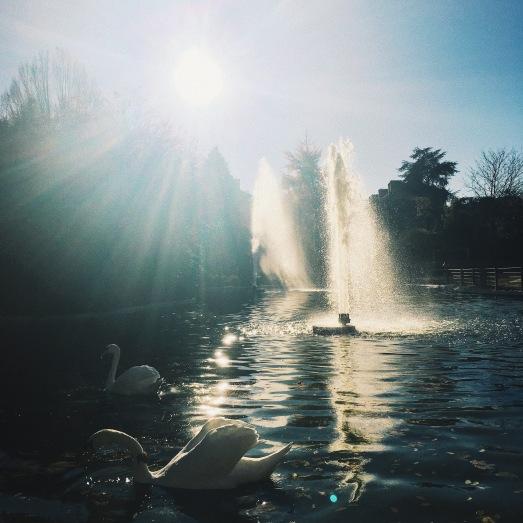Swan Lake/ Park Salagnac
